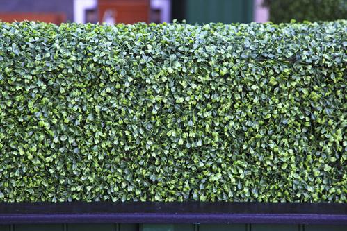 charmant haie vegetale brise vue 6 beautiful brise vue. Black Bedroom Furniture Sets. Home Design Ideas