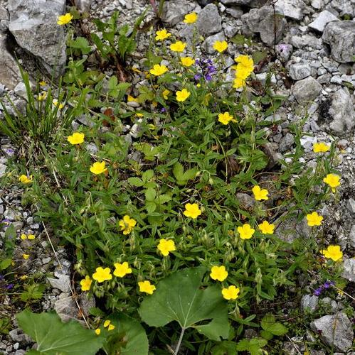 arbuste à fleurs jaunes : liste - ooreka