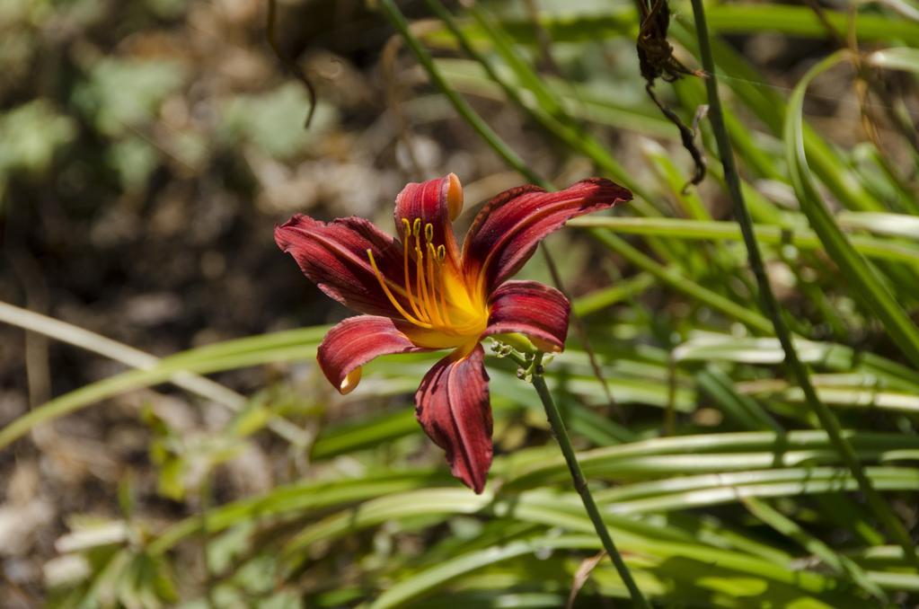 8 plantes à rhizome