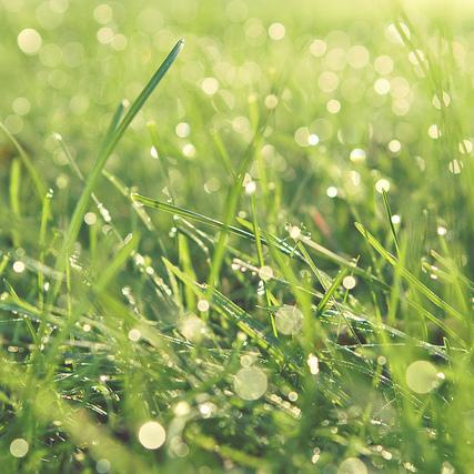 Que faire en avril pour la pelouse ?