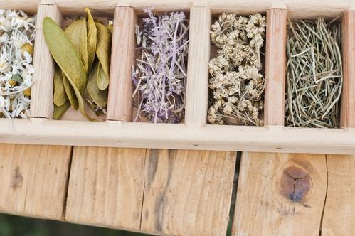 Médicament à base de plante