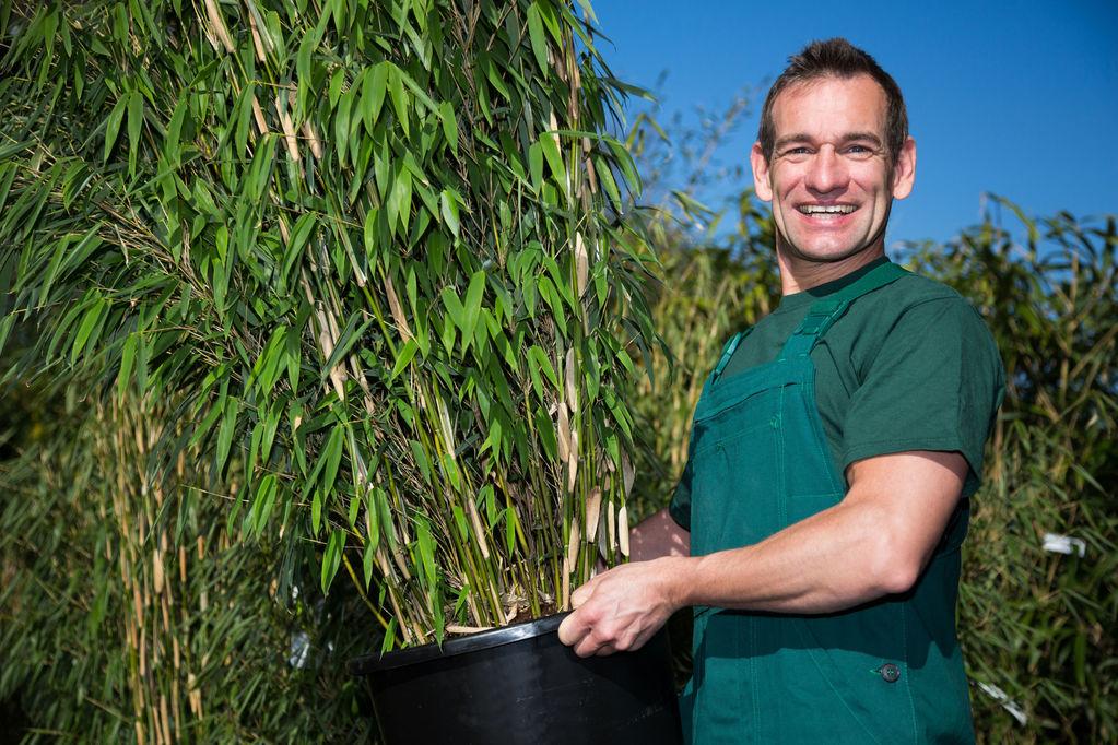 Variete bambou jardiniere