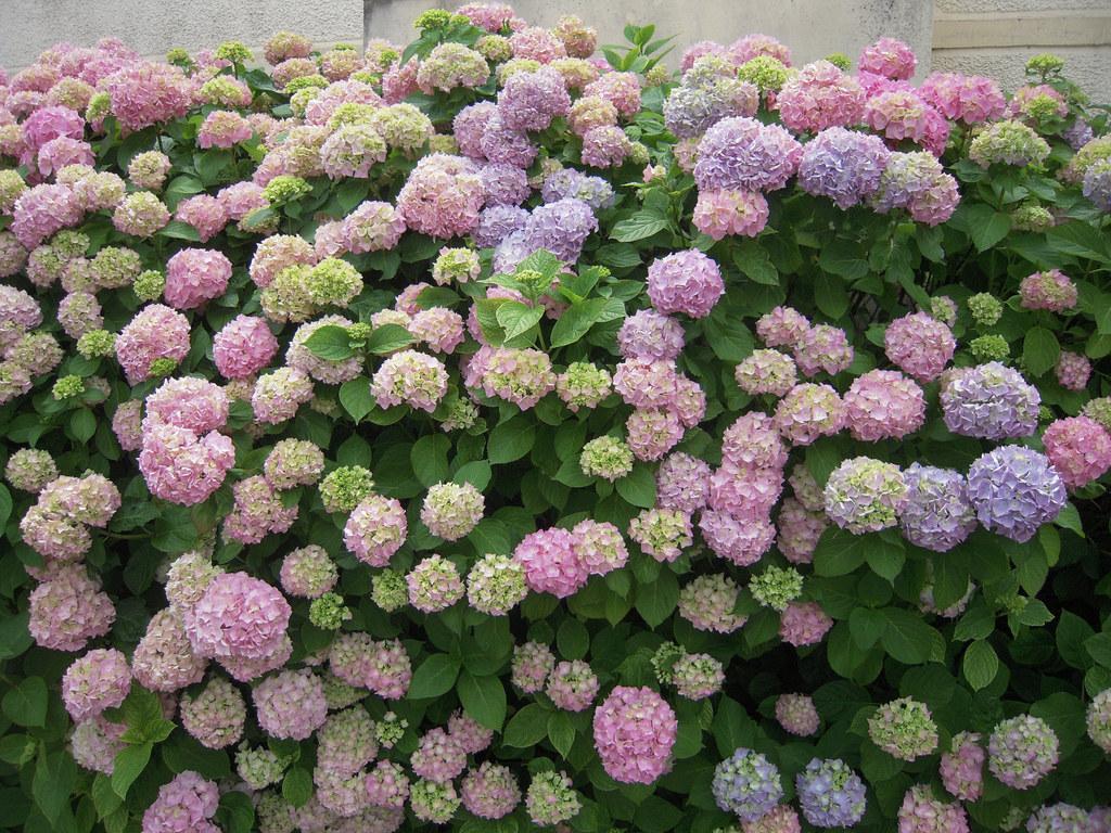 Les plantes caduques