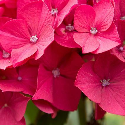 foto de Fleur rouge : liste Ooreka