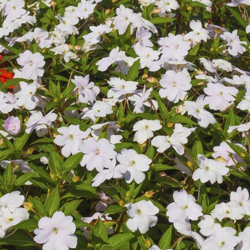 Fleur d\'ombre : liste - Ooreka