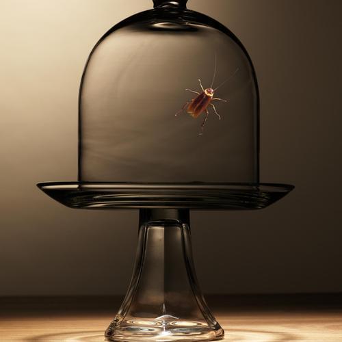 marc de caf le recycler ooreka. Black Bedroom Furniture Sets. Home Design Ideas