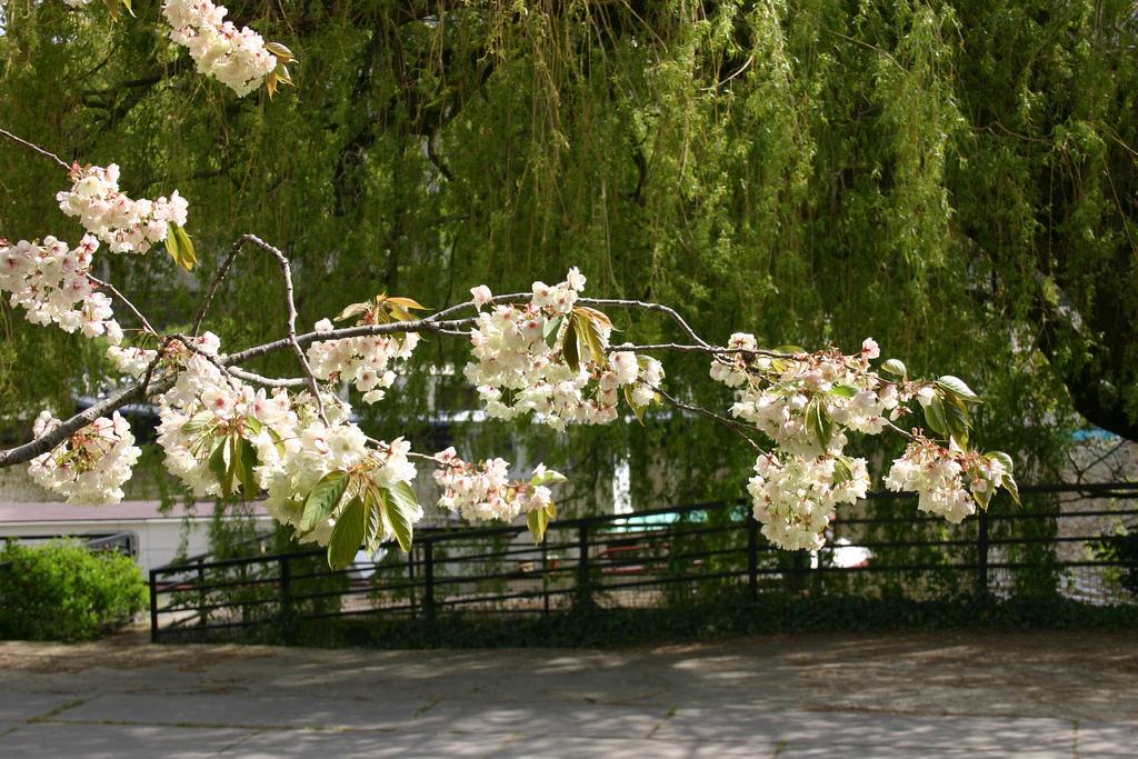 Les arbres qui fleurissent en mai