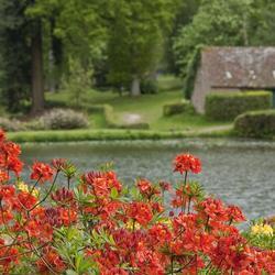 forcer des rameaux d 39 arbustes floraison printani re jardinage. Black Bedroom Furniture Sets. Home Design Ideas