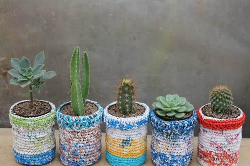 mini cactus ooreka. Black Bedroom Furniture Sets. Home Design Ideas