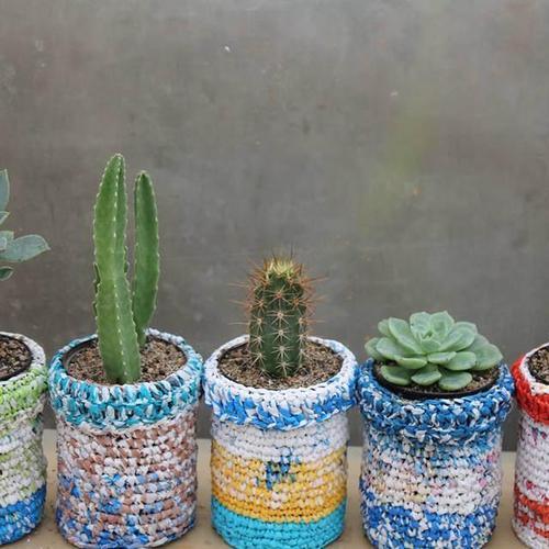Cultiver un cactus
