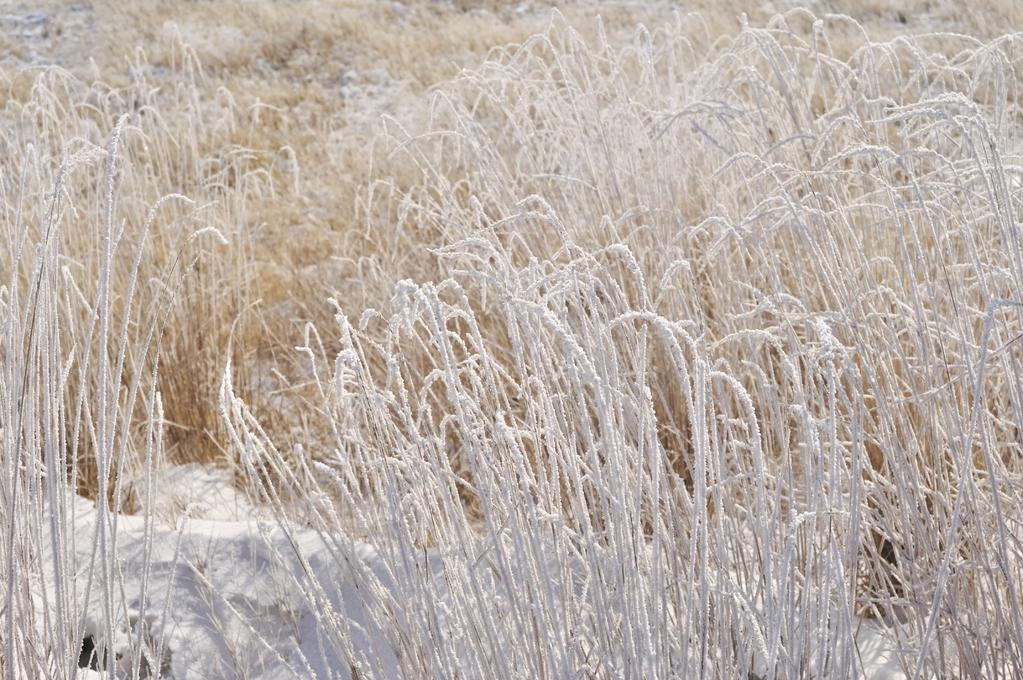 Les herbes et graminées à planter en février