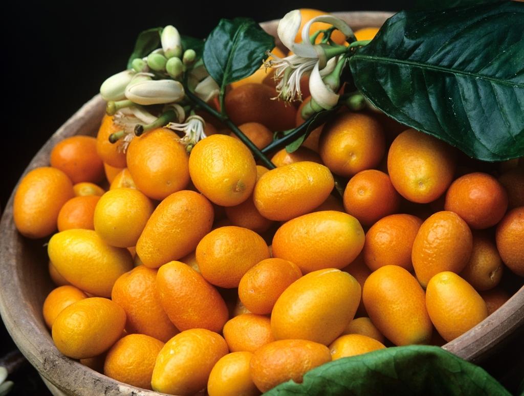 Des fruits exotiques dans le sud - Liste fruits exotiques avec photos ...