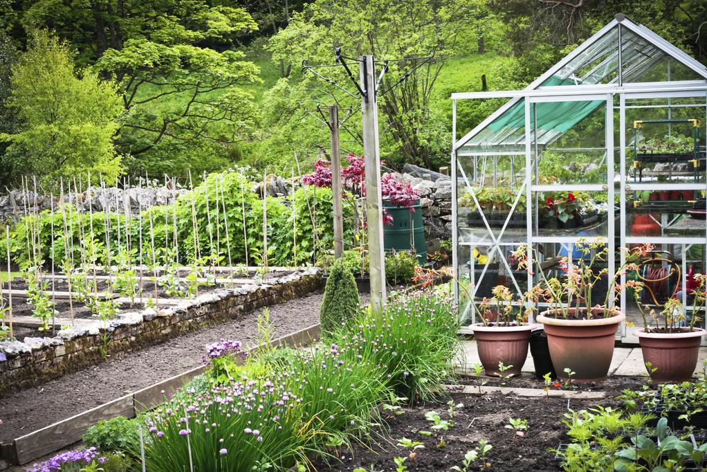 Quels Legumes Planter En Juillet Ooreka