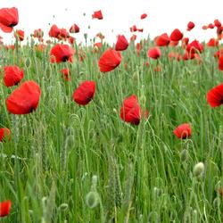 10 fleurs des champs