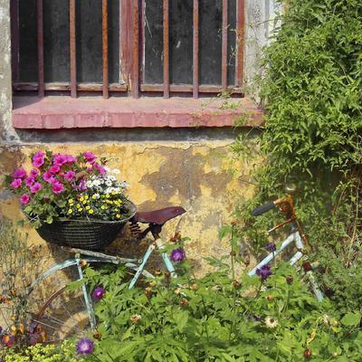 Les fleurs à cueillir en mai
