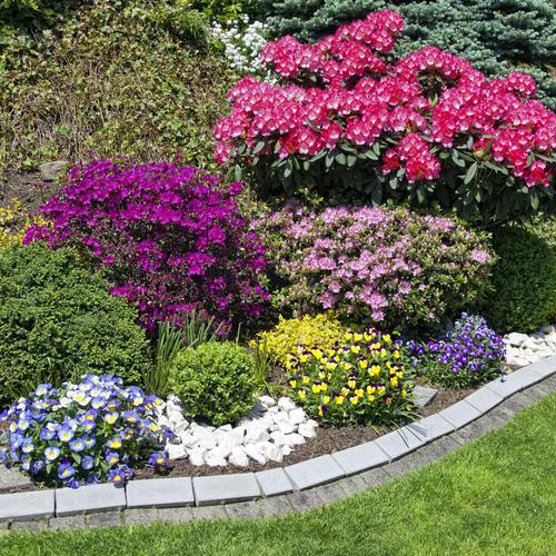Aménager un jardin caillouteux - Aménagement de jardin