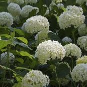 Composer un jardin blanc am nagement de jardin for Composer son jardin