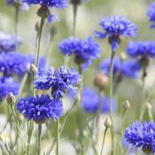 concevoir un jardin bleu am nagement de jardin. Black Bedroom Furniture Sets. Home Design Ideas