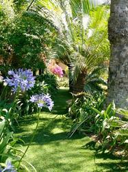 Jardin avec fleurs et arbres exotiques et gazon synthétique