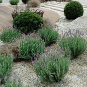 crer un jardin sur gravier - Amenager Son Jardin Avec Des Pierres