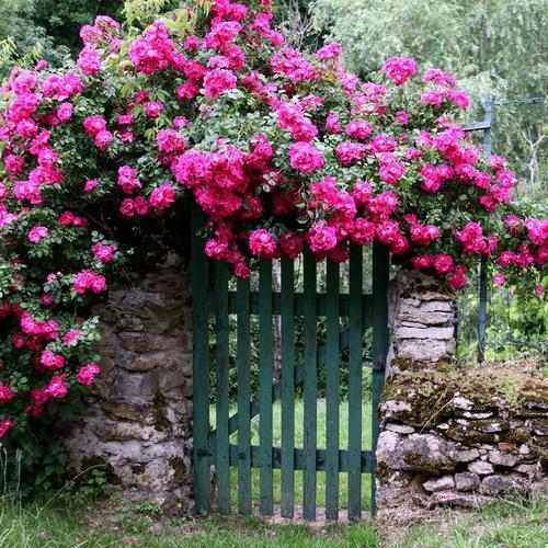 Créer un jardin romantique - Ooreka
