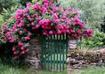 Créer un jardin romantique