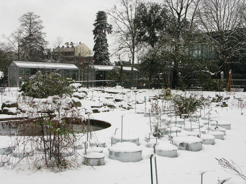 Quels l gumes planter en f vrier for Jardin hiver plantation