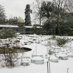 Jardinage vos astuces sur page 9 for Jardin hiver plantation