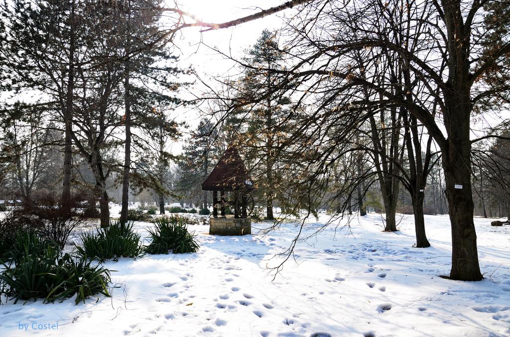 Quels arbres planter en janvier Jardinage en janvier