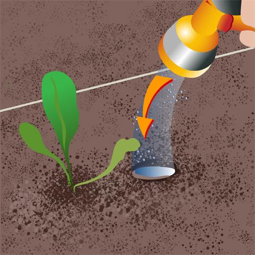 Arrosez les plants