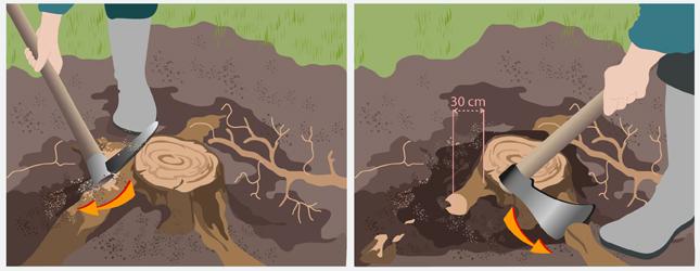 Enlever une souche jardinage - Comment couper un arbre a la tronconneuse ...