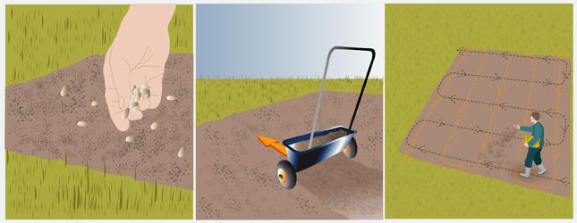 Faire un semis l 39 ext rieur jardinage - Semer a la volee ...