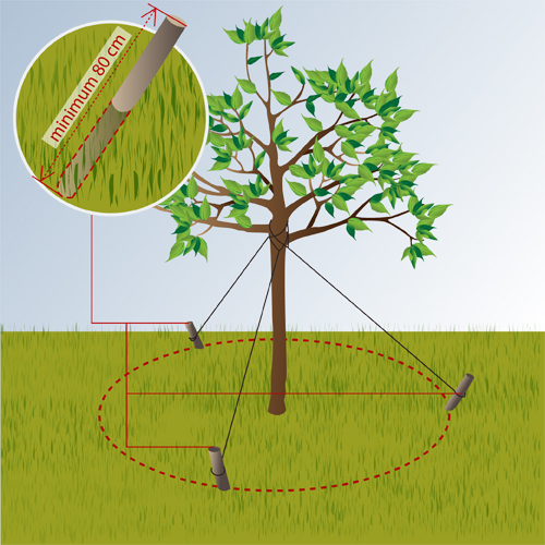 Tuteurer un arbre jardinage for Plante un arbre