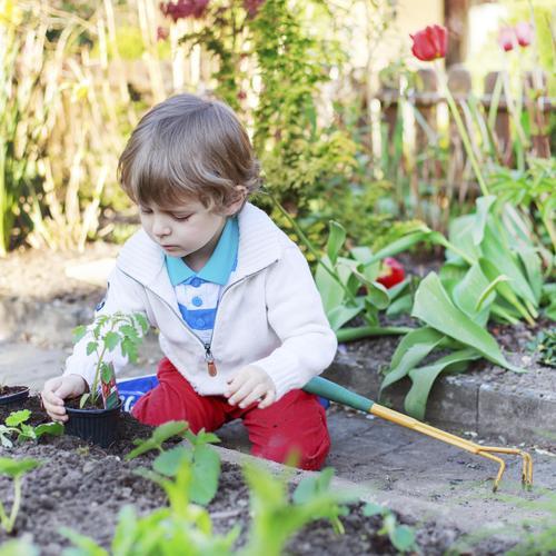 Cultiver un potager à l'ombre