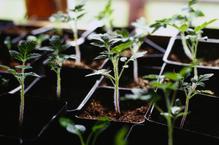 Bacs à jardinage