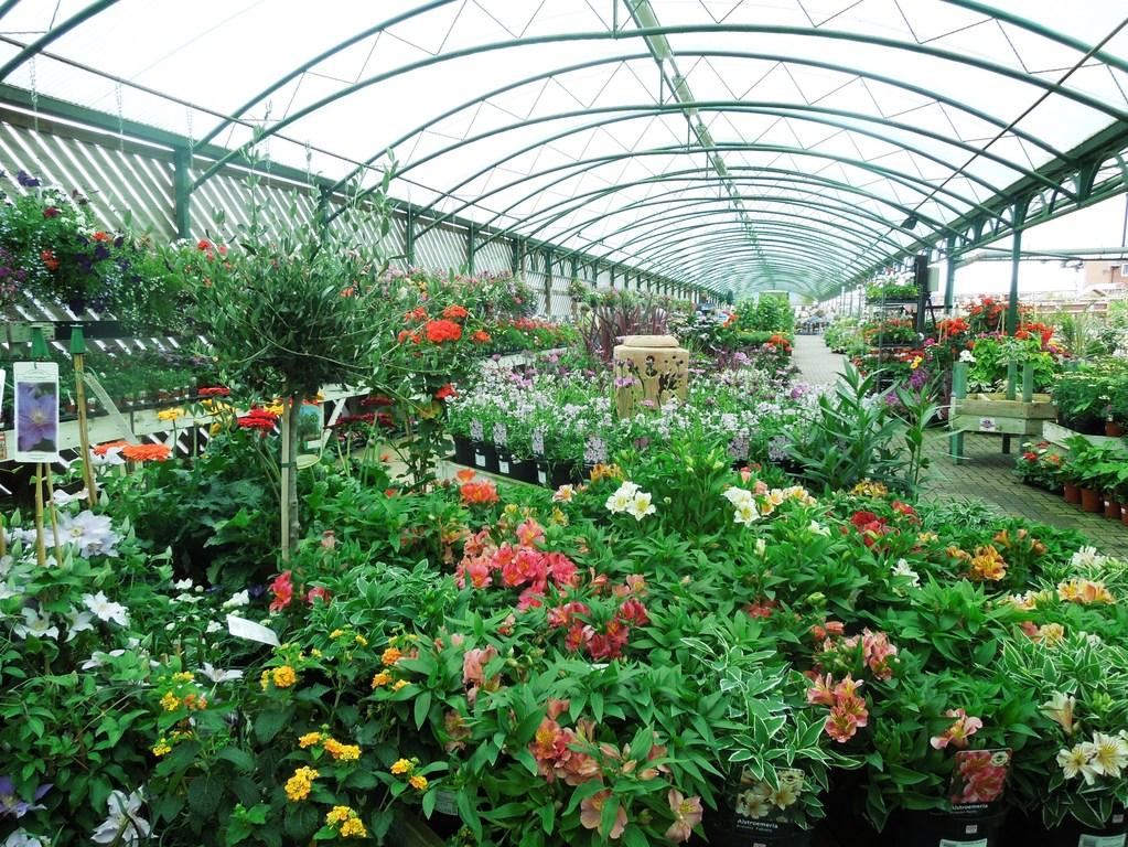 Choix Plante En Jardinerie Criteres De Bonne Sante