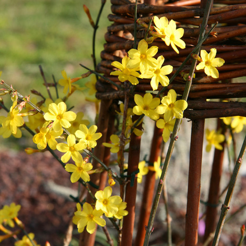 Que faire en février pour les arbres et arbustes d'agrément ?