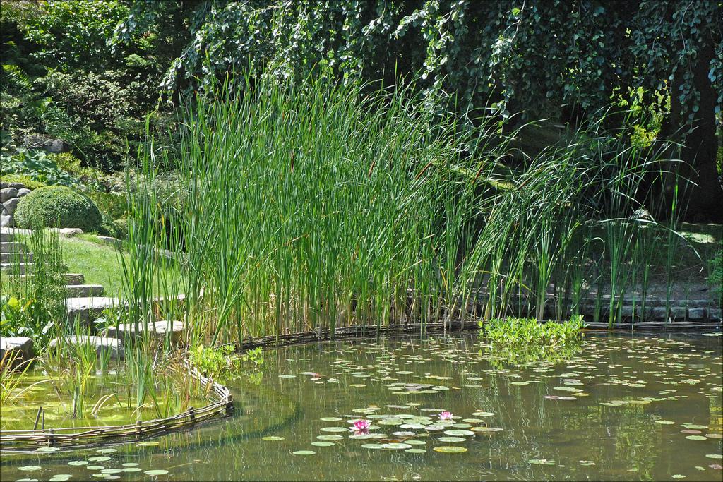 Les herbes et graminées à planter en mars