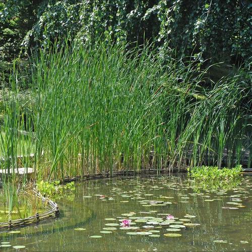 Lutter contre les algues filamenteuses dans un bassin - Ooreka