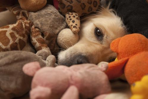 Jouets pour chien: les jouets utiles