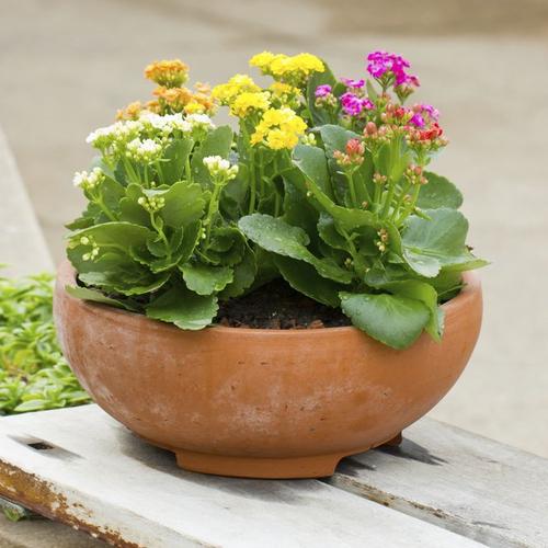 Plantes A Croissance Rapide Ooreka