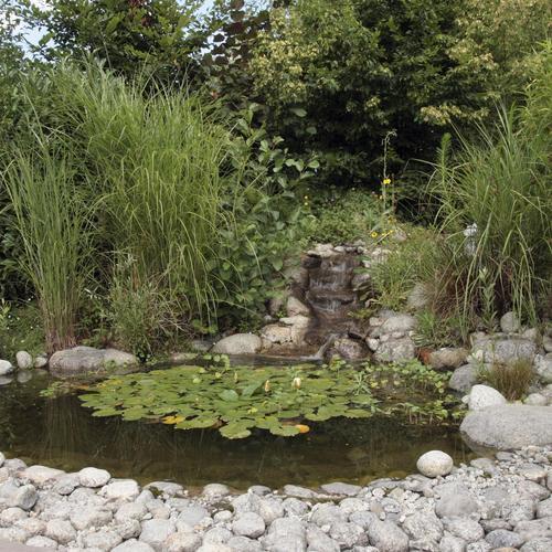 Réaliser le lagunage naturel d'un bassin
