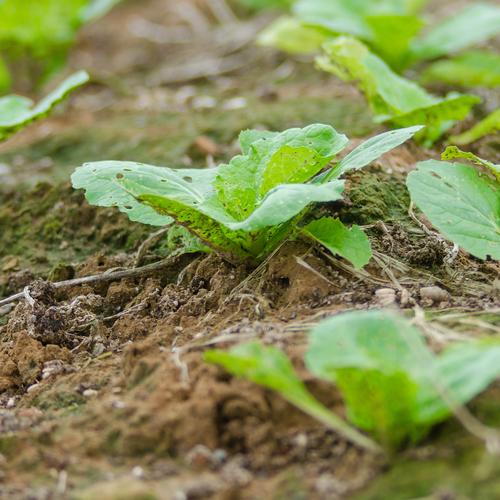 Bulbes fruitiers quoi planter en octobre ooreka - Quoi planter en aout septembre ...