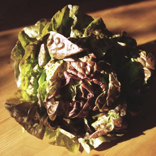 Aromates l gumes quoi planter en f vrier ooreka - Quel legume planter en juin ...