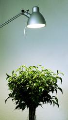 lampe terrarium plante
