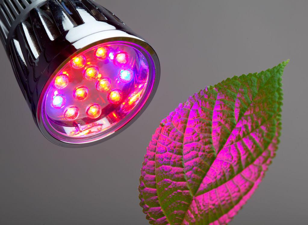 Lampe horticole choix et prix d 39 une lampe horticole ooreka for Led culture interieur
