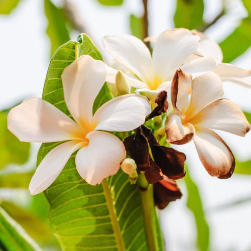 Plante A Fleurs Blanches Liste Ooreka