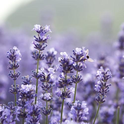Travaux de jardinage en septembre - Ooreka
