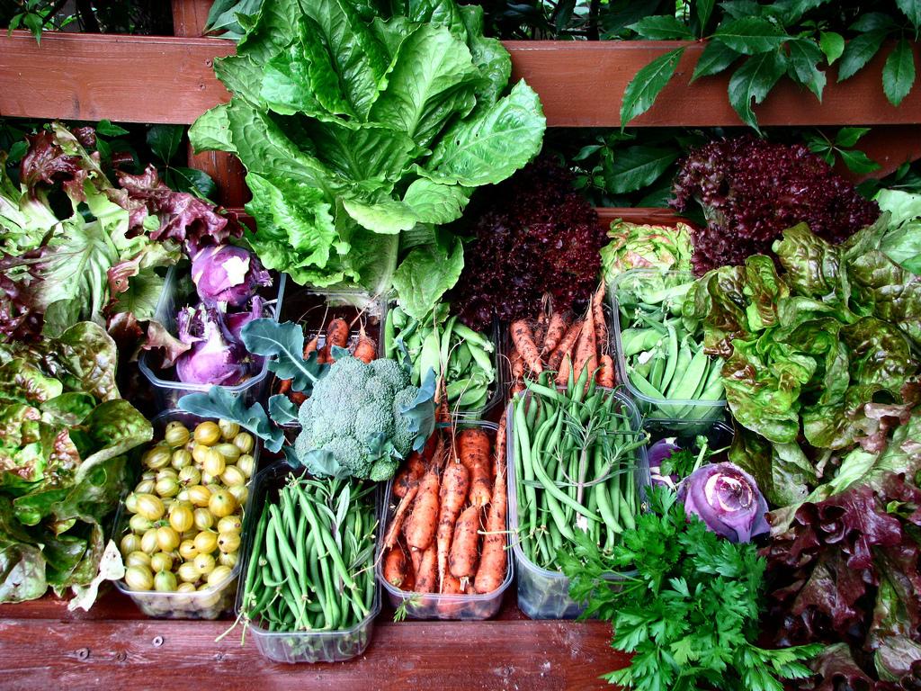 10 m de potager 95 d 39 conomie par an en l gumes frais ooreka - Haricot vert fruit ou legume ...