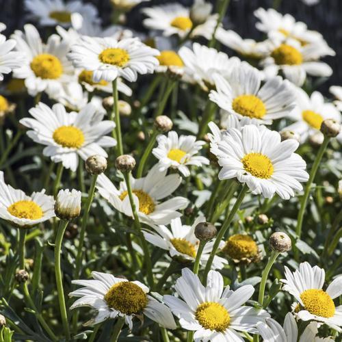 Fleurs De Balcon Liste Ooreka